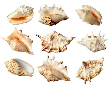 marine environment: collection of  various seashells on  white background. each one is shot separately Stock Photo