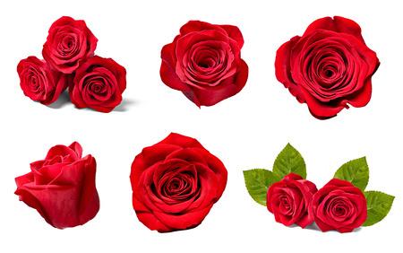 Sammlung von verschiedenen Rosen auf weißem Hintergrund. Jeder wird separat erschossen Standard-Bild