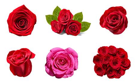 Sammlung verschiedener Rosen auf weißem Hintergrund. Standard-Bild