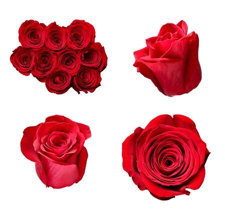 raccolta di varie rose su sfondo bianco. ognuno è girato separatamente Archivio Fotografico