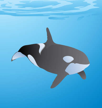 Vector Illustration of Whale swimming under water just below the sea level in the ocean.
