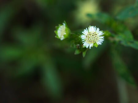 flores peque�as: flores peque�as