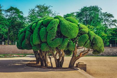 Sculptured Cypress tree inside Buen Retiro Park in Madrid, Spain.