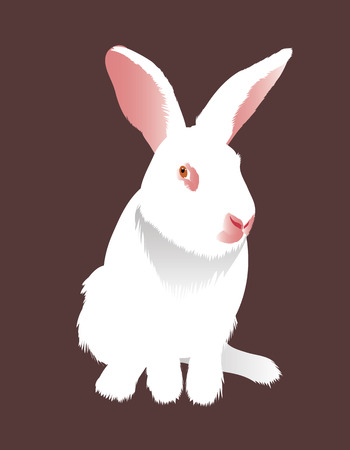 White rabbit on a chocolate background  Illustration