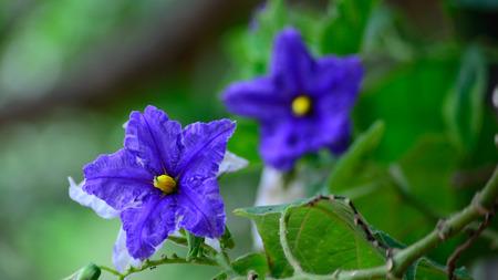 flora: Eegplant flora