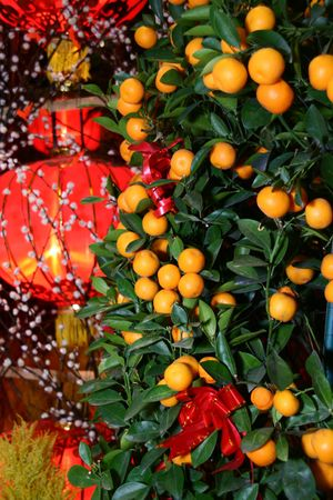 Chinese New Year Mandarin orange tree decoration with red lantern in the background. Intentional selective focus, narrow depth of field.
