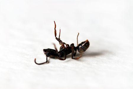 Ant - macro close-up shot. Shallow depth of field.