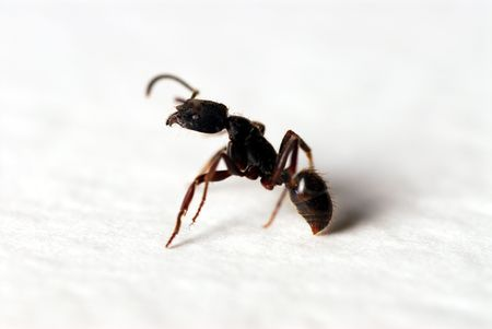 ant: Ant - macro close-up shot. Shallow depth of field.