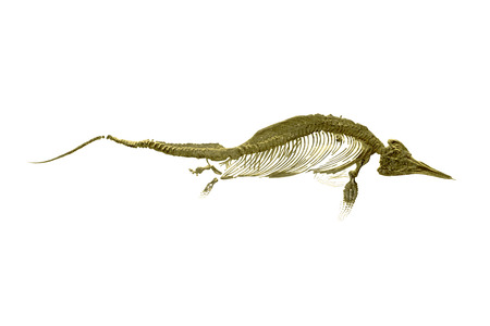 Fossil remains of a fish dinosaur over white background