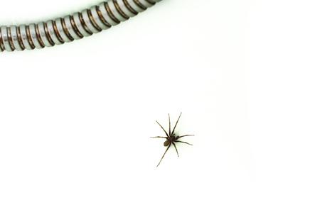 A spider in the bathtub on the white background Zdjęcie Seryjne