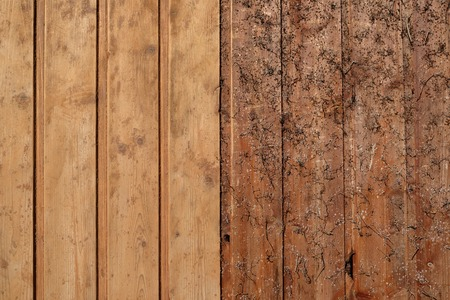 Freshly ground wooden slats next to an untreated wall overgrown with ivy Stock Photo