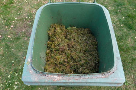 A green bio bin with freshly mown grass clippings Standard-Bild
