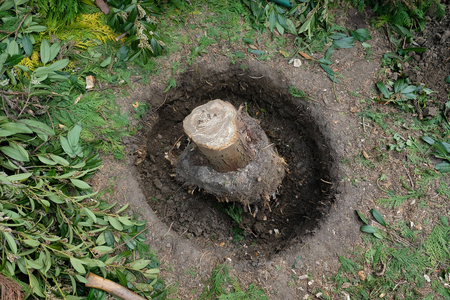 Excavation around a tree stump after precipitation of a tree