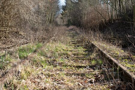 Old, overgrown tracks in a forest Standard-Bild