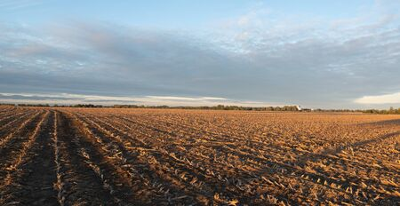 A freshly worked field in the light of a low sun
