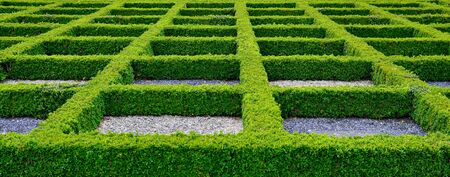 A maze created from green hedges