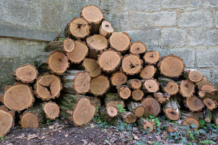 Clean sawn, rustic firewood in front of a wall