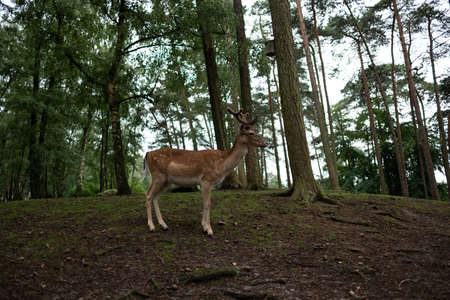 Male deer on a hilltop in the forest