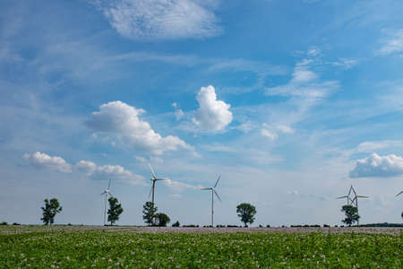 A landscape with fair weather clouds and a flower field with wind turbines in the background.