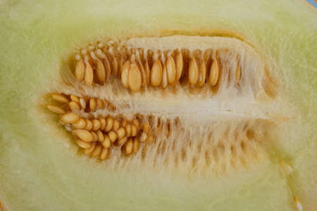 Sliced honeydew melon in the middle with the seeds not peeled out. Standard-Bild