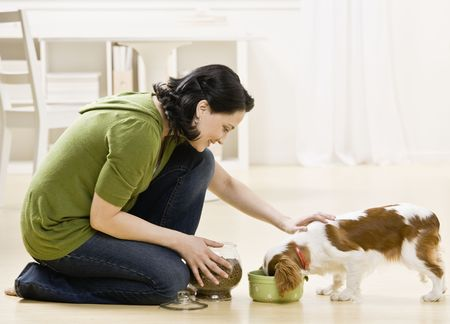 animal feed: Woman feeding and petting puppy. Horizontally framed shot. Stock Photo