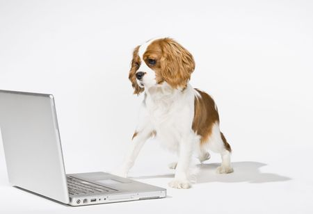 email: Portrait of puppy with laptop. Horizontally framed shot.