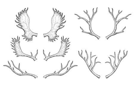 Set of silhouettes of deer and moose horns. Hand drawn illustration. Animal theme Ilustracja