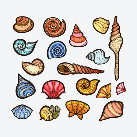 Vintage sea shell set collection. Hand drawn collection of various sea shells. Isolated on white background. Illustration