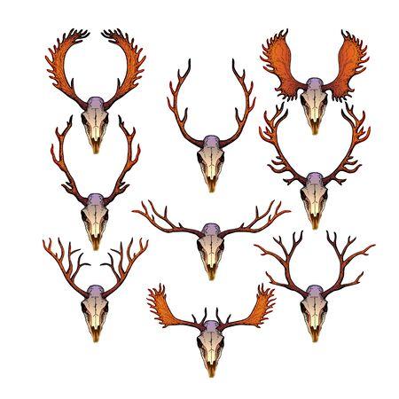 elk point: Skulls of female and male deer with antlers