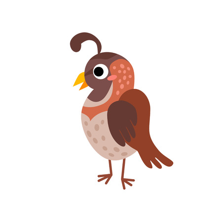 Cute animals - quail. Illustrations for children. Baby Shower card. Cartoon character bird isolated on white background. Domestic animal wildlife Imagens - 124007471
