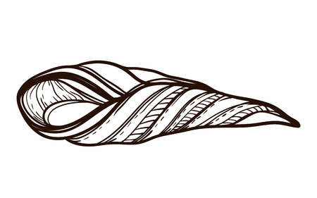 Sea shell isolated. Coloring book for adults