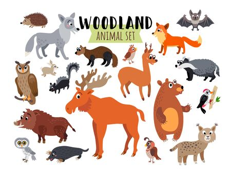 Woodland Forest Animals set isolated on white