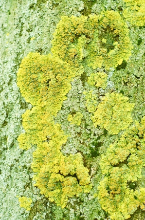 Moss mushroom on tree trunk  2 Stock Photo