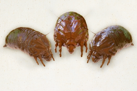 Mites - 3d rendered illustration Imagens