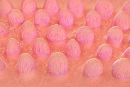 otorhinolaryngology: Macro orecchio interno - illustrazione di rendering 3D