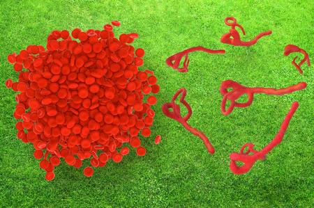 hospital germ: Ebola Virus and Blood cells - 3d rendered illustration