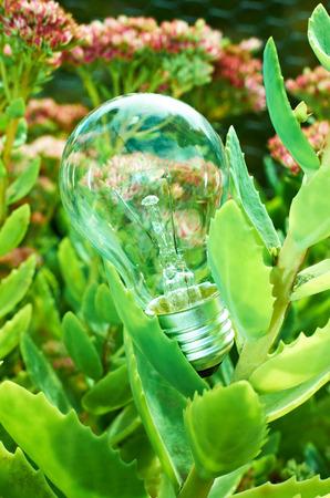緑の葉の間の電球 写真素材