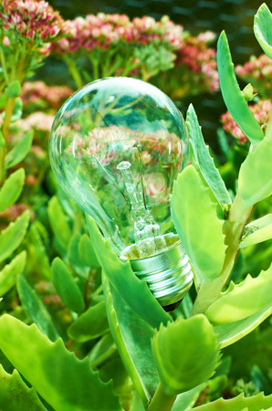 electric light bulb between green foliage