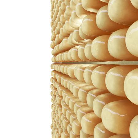 脂肪細胞の 3 d レンダリングされた図 写真素材
