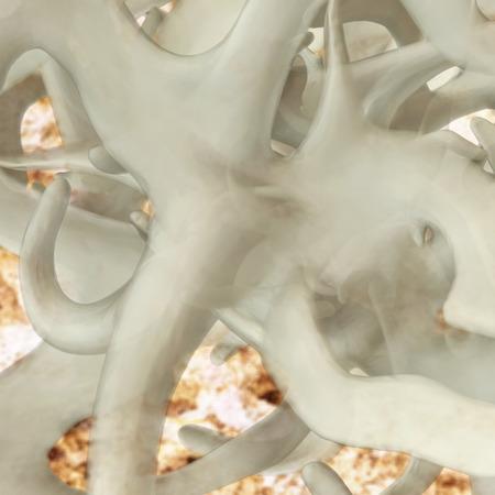 connective tissue: Fascia - 3d rendered illustration