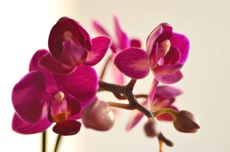 A branch of lilac orchid  on a light background