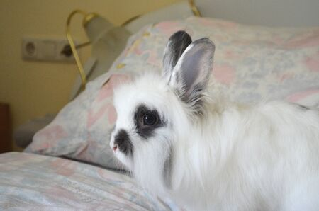 A White bunny rabbit portrait  - side view