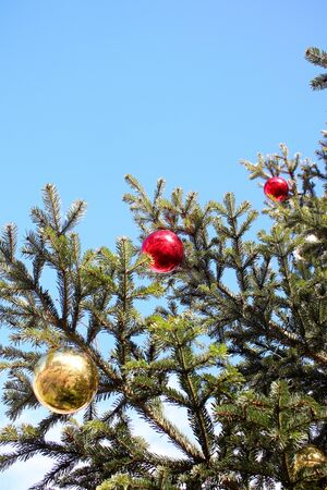 Gold and red christmas balls on branch