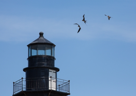 fort jefferson: Three Magnificent Frigatebirds are frolicking in the wind above the old lighthouse at Fort Jefferson located in the Dry Tortugas.