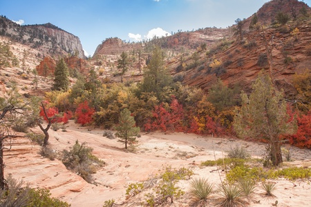 high plateau: Zion National Park, located in Utah, is an intensely beautiful 229 square mile place featuring high plateaus and a deep narrow canyon  This image was taken during the Fall in the high plateau area  The spectacular geology adorned with Fall colors was simp