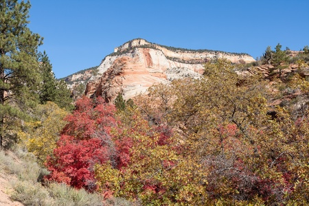 As if the incredible colors of the rocks are not enough, Autumn at Zion puts your senses on overload. Stock Photo