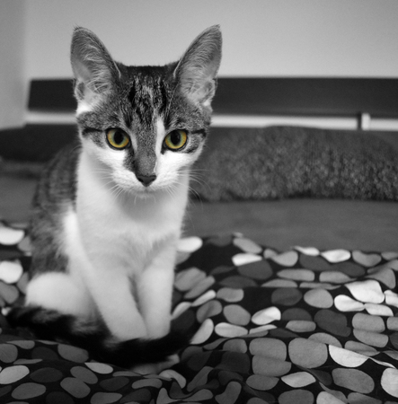 Young interessted beautiful cat is sitting on a bed while watching whats happening.