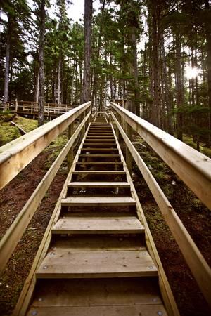 provincial: Wooden stairs  at Kitsumkalum Provincial Park