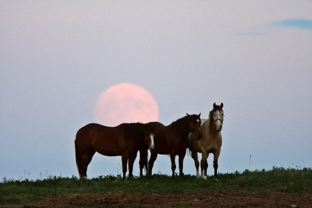 Full moon behind three horses