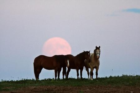 Full moon behind three horses Stock Photo - 8393006